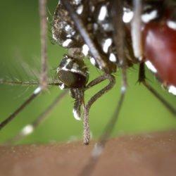 Wie gefährlich ist Dengue-Fieber in Thailand mit Baby wirklich?