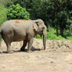 Das Elephant Sanctuary Phuket